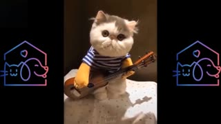 Cutest & FUNNIEST CATS COMPILATION