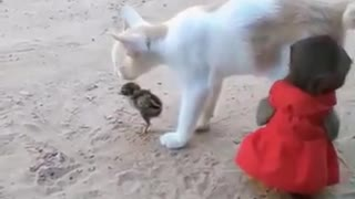 kitten plays with a little monkey and a bird, so cute <3