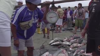 Video: La resolución sobre cuotas de pesca de tiburón, que generó polémica en el país