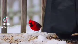 Cardinal Photoshoot