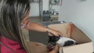 Conductor de Metrolínea salva a gato atropellado en plena autopista a Floridablanca