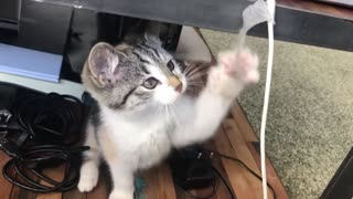 Cat ,cat playing
