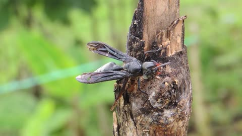 Close Camera On Insect Wasp On Tree