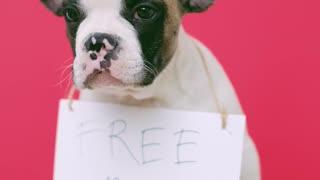 Free Kisses💋 Adorable dog photo session