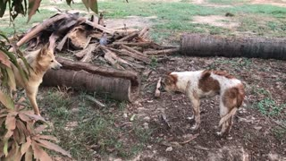 Dogs Fighting Compilation