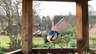 Beautiful colorful bird stealing a food pill