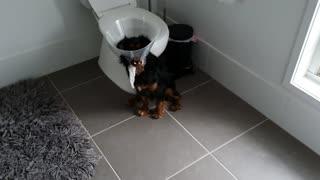 Suspiciously Quiet Pup Stuck in Pet Cone
