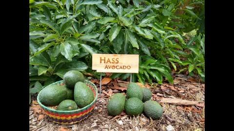 D&R Fruit Market 0209