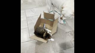 Doggy Takes Feline Friend on a Box Ride