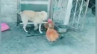 The Future of Funny Dog Fight Videos