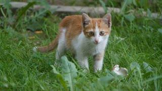 Lovely little cats catlove 2021