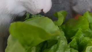 FunnyBunny alimentando