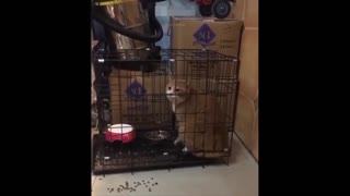 cats dogs funny reactions in some occations