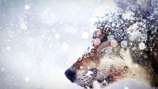 Blizzard wolf