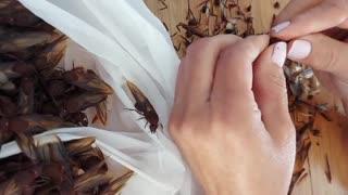 Colonia de hormigas culonas sorprendió a una familia en Bucaramanga