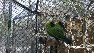 We enjoy beautiful parrots.