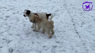 Valentines Snow Day for the Coolwag Dogs