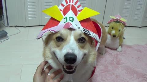 Little fuzzy Samurai dog