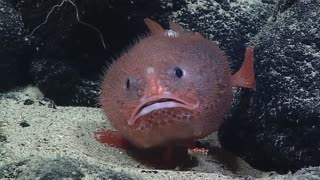 Ocean exploration discovers bizarre looking creature
