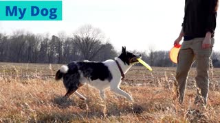 Training of dogs   Dog Obedience   Easy Dog Training