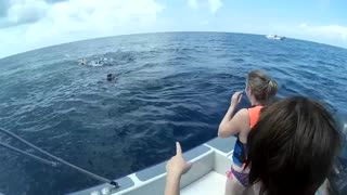 Whale Shark Tail to the FACE!