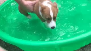 Puppy Learning to Swim in Mini Pool