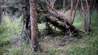 Second Video on Sasquatch Village