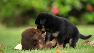 Cute Puppy love puppy