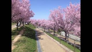 Run in Japan