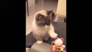 Cute Cat Trying To Copy Toy Kitty Cat ! REALLY CUTE !