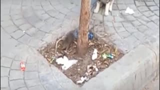Funny mouse with a cat