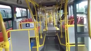 Desinfectan transporte masivo