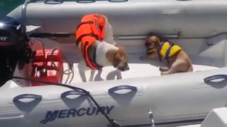 Dogs are the best! - Dogs on Boats