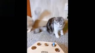 Funny Pet Reactions - Petsnmore