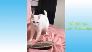 Dancing White Cat in Music Beats