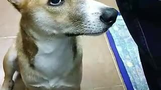 ADORABLE DOG PATIENTLY WAITING AND PRAYING BEFORE EATING| NEO'S ADVENTURE