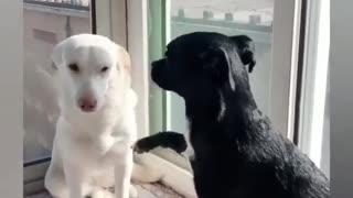 Friends together forever