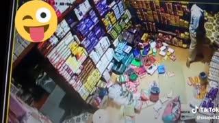 When a Lion entered into a Shop