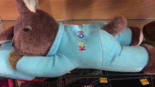 Snoring Kangaroo