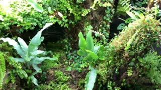 Central American Vivarium