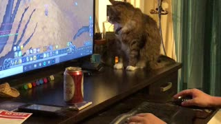 Cat loves WoW