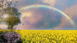 Tranquility & Rainbow 🌈