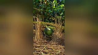 A beautiful bird builds its nest💖💖
