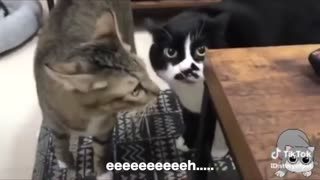 CATS SPEAKING ENGLISH // FUNNY!!