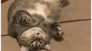 Funny cat video part 2