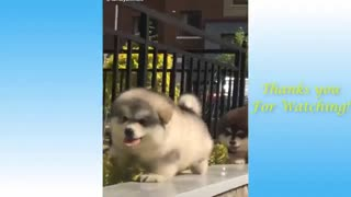 Cats and dogs funny videos!
