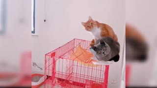 Funny cats Change your Mind 04/2021