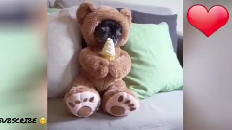 Cute Puppy Eating Ice Cream