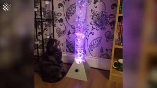 Hilarious Cat Viral Video Compilation