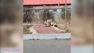 Baby Dog Alaska Funny